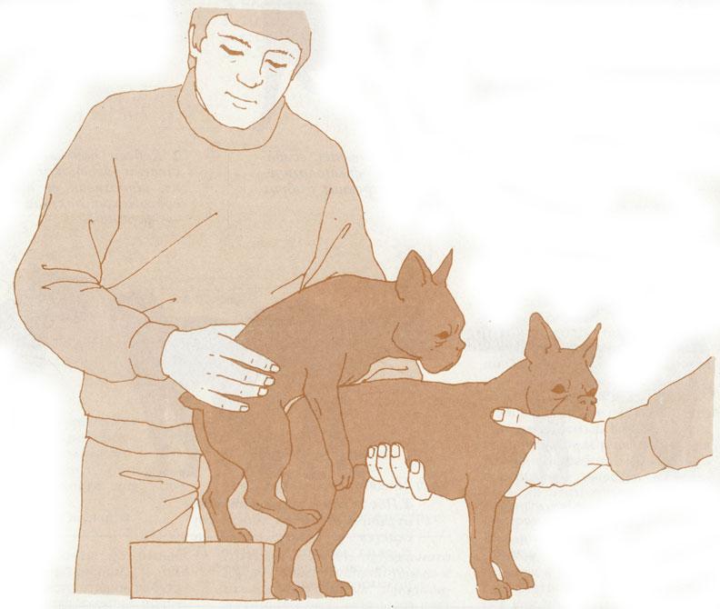 маленьких собак разных пород