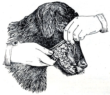Мазать бородавки оксолиновой мазью