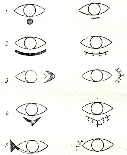болезни глаз у собак с фотографиями