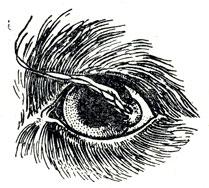 болезни глаз у собак с фотографиями 6