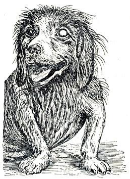 болезни глаз у собак с фотографиями 7