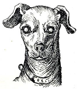 болезни глаз у собак с фотографиями 9
