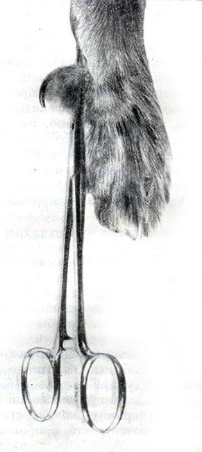 Народные средства лечения себореи на голове
