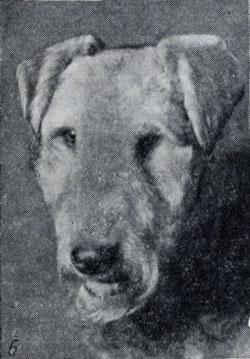Форма ушей и глаз: 6 - уши в