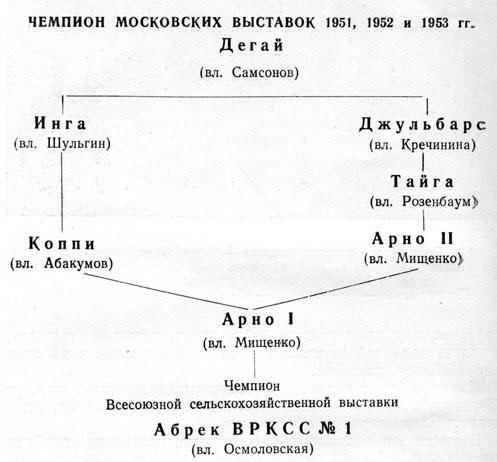 Чемпион Московских выставок 1951, 1952 и 1953 гг