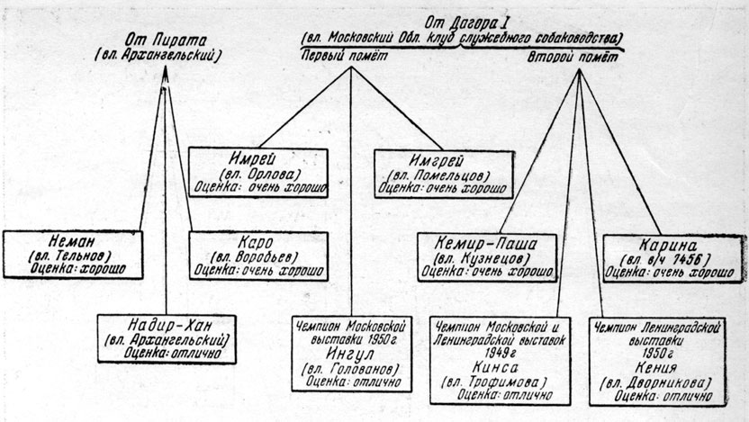 Рис. 64. Схема семейства суки Никсы