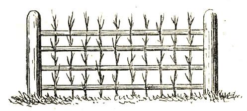 Рис. 6. Забор из фашинника
