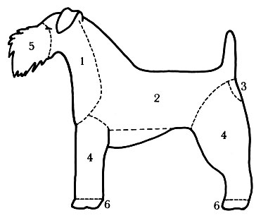 25 - Форма стрижки керри-блю-терьера