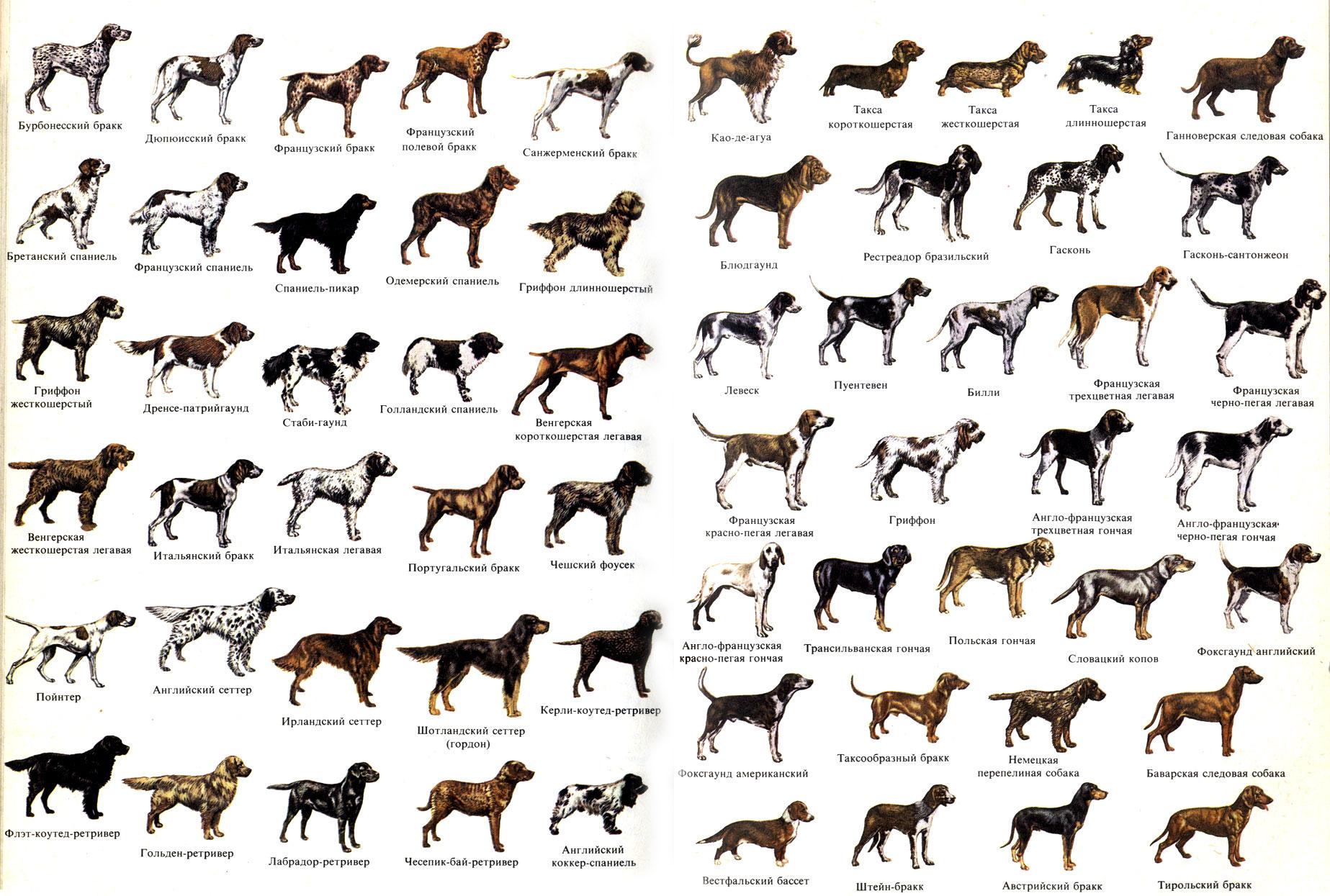 фото с пород собак