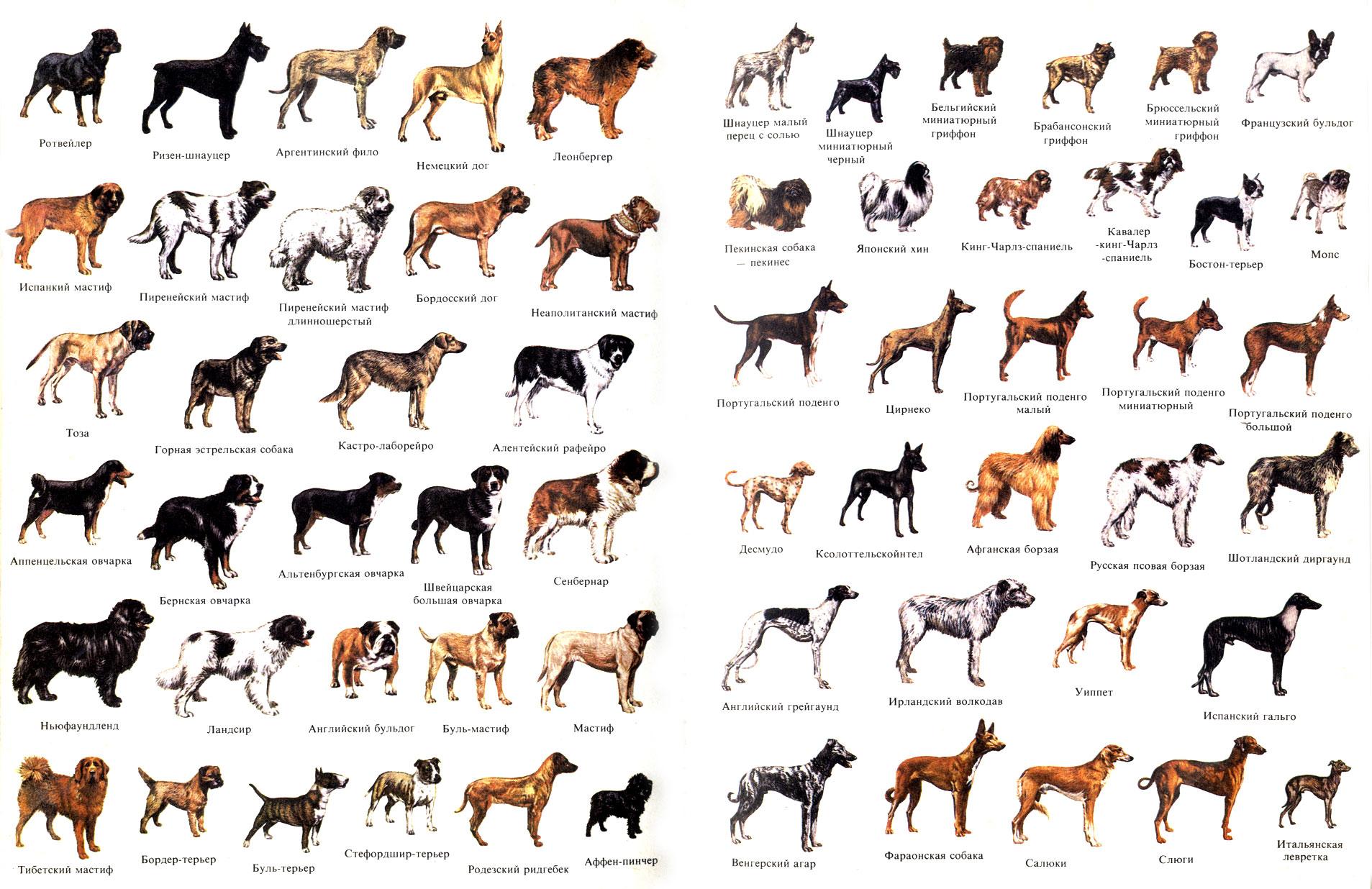 все породы собак фото: