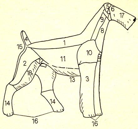 Схема тримминга эрдельтерьера