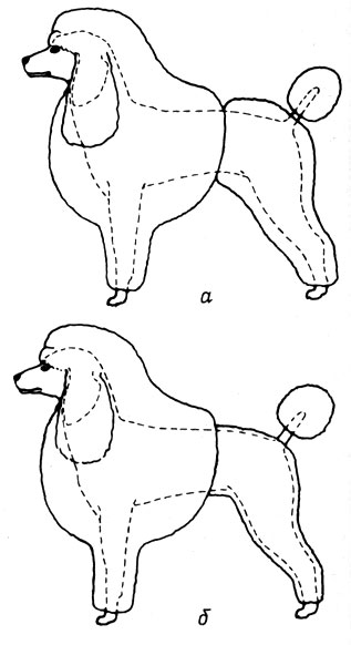 Рис. 26. Прическа 'Вторая щенячья': а - подготовка к стрижке, определение края 'гривы'; б - правильное оформление прически
