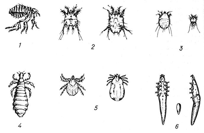 какие паразиты живут в кишечнике человека