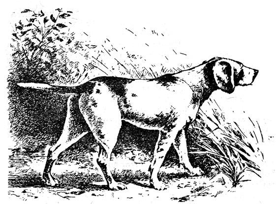 Эспаньол собака охотничья