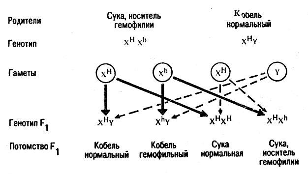 Схема наследования признака