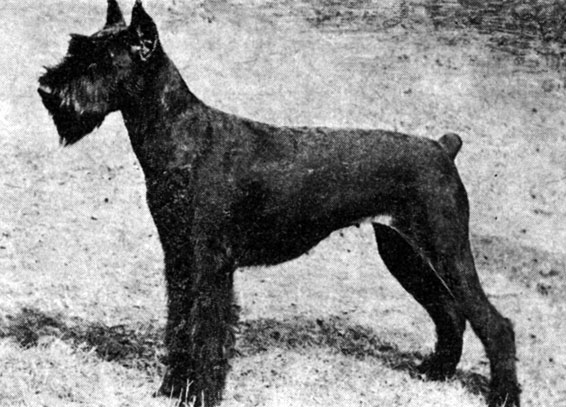 Клуб служебного собаководства оценка