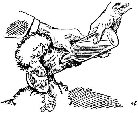 как давать лекарства от глистов собаке
