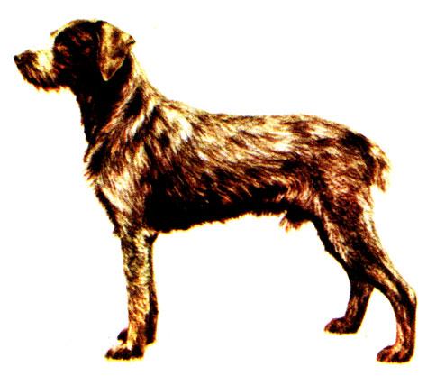 Легавые собаки 1980 Гусев В