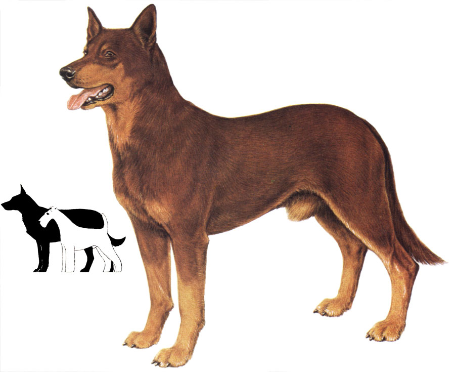 http://kinlib.ru/dogs/item/f00/s00/e0000001/pic/000000.jpg